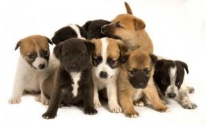 puppies2